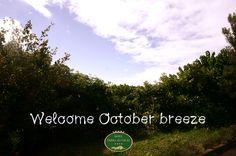 October breeze! 1October 2013