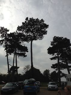 Tall Thin Christmas Trees Uk