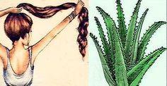 Aloe vera para el cabello Aloe Vera For Skin, Best Hair Straightener, Peinados Pin Up, Happy Minds, Crescendo, Stop Hair Loss, Happy Skin, Moisturizer With Spf, Prevent Wrinkles