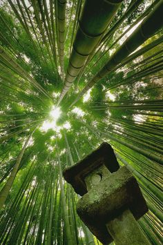 "musts: "" Bamboo ferest, Japan. Photography by Danny Dungo """