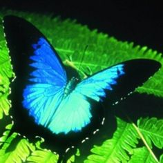 Australian Butterfly Sanctuary. I have done this. Cairns when I was 14 or 15. And Coffs Harbour in 2012