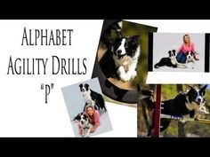 Agility Dog Training, Alphabet Drills, Pam's Dog Academy www.pamsdogtraining.com Pamela Johnson, San Diego CA Dog Tricks and Dog Training too!