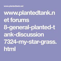 Benefits of Purigen Aquascaping, Benefit, Grass, Aquarium Ideas, Filters, Plants, Star, Grasses, Plant