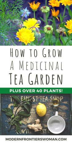 How to Grow a Medicinal Tea Garden (Plus over 40 Plants! Healing Herbs, Medicinal Plants, Permaculture, Making Herbal Tea, Tea Plant, Growing Herbs, Growing Tea, Herbal Medicine, Medicine Garden