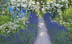 Lavendel ist als Beeteinfassung für Rosenbeete sehr beliebt