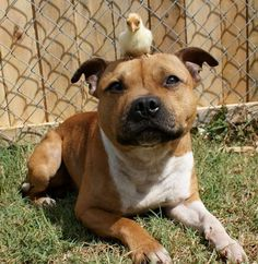 Seriously, just look at how happy they are. Adorable! - This Dog Loves His Rabbits and Chicken Don't miss the rest --