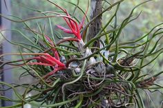 "I love Air plants Officially known as the Tillandsia. I hope you will give them a try if you haven't already! Once you get the ""air plant bug"" you will …"