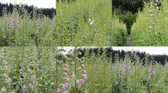 begin September, lijkt midden zomer op onze kwekerij