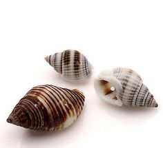 Wholesale HOT! Jewelry Loose Beads Shell Natural Spiral 28x16mm-16x9mm