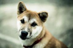 free high resolution wallpaper dog
