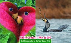 Bird Photographer of the Year Award 2016 - Participate and win £5,000…