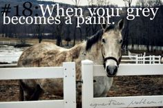 more like when my mostly white paint becomes a bay.. its always worse when you just gave them a bath for a horse show and they find a nice dusty spot, roll, and just grind it in (TGFSS.. thank God for show sheen)