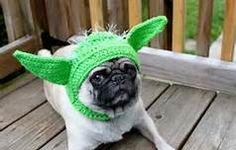 pug carlino by star trek