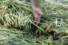 Core NRCS Conservation Practices for Enhancing Soil Health — Webinar Portal