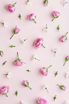 PINK / Roses