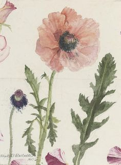 poppy by Elizabeth Blackadder