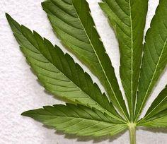 News: Marijuana Less Harmful than Tobacco, Says Study | Greatist