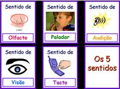 EDUCAÇÃO EM ALTO GRAU: Novas atividades órgãos dos sentidos, Os cinco sentidos