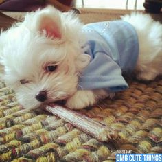 Saturday Puppies from OMG Cute Things