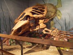 Ancient turtle at the Glendive Dinosaur and Fossil Museum