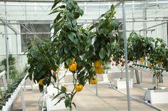 Aeroponics Gardening