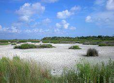 Merritt Island National Wildlife Refuge - Merritt Island FL