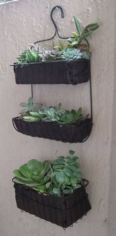 Make a hanging garden with a bathroom basket! Make a hanging garden with a bathroom basket! Patio Garden, Plants, Succulents, Succulents Garden, Patio And Garden, Hanging Garden, Container Gardening, Ikea Planters, Gardening Tips