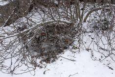 Téli madáretetés | Magyar Madártani és Természetvédelmi Egyesület Snow, Outdoor, Wood, Outdoors, Outdoor Games, The Great Outdoors, Eyes, Let It Snow