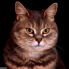 cat portrait by Tamás Mészáros on 500px
