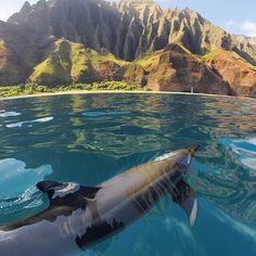 A dolphin swimming in Kauai Island - Hawaii #VisitHawaii