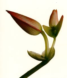 Happy Easter 2013- Irving Penn http://markdsikes.com/2013/03/31/easter-bouquet/