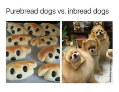 funny puns hilarious / funny puns ` funny puns hilarious ` funny puns pick up lines ` funny puns jokes ` funny puns for adults ` funny puns for boyfriend ` funny puns clever ` funny puns humor Funny Animal Jokes, Cute Funny Animals, Stupid Funny Memes, Funny Animal Pictures, Animal Memes, Haha Funny, Funny Cute, Funny Dogs, Funniest Memes
