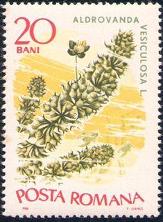 timbre postale - Google-keresés Fruit, Google, The Fruit