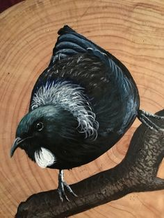 Tui on Macrocapa Round by New Zealand Artist Robyn Hall