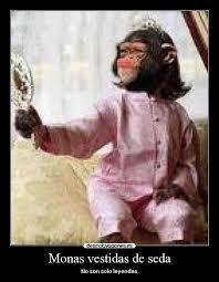 Resultado de imagen para chimpance fotos graciosas