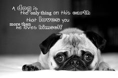 true story - that's how Andy, my pug, looks as me.  Lucy (aka Lucy-fur) not so much.