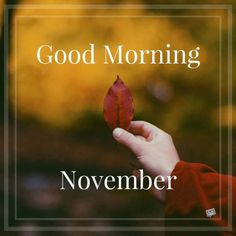 When the of the month has arrived, share a warm morning pic with the ones you love and care about and welcome a lovely new month. Welcome November, Hello November, New Month Wishes, New Month Quotes, November Thanksgiving, Happy Wishes, Months In A Year, Be Yourself Quotes, Life Quotes