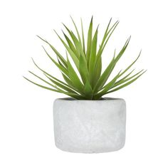 Tilly@home Artificial Plant Grass in Pot (665 INR) ❤ liked on Polyvore featuring home, home decor and floral decor