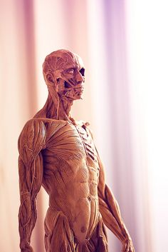 Anatomical Figure by Matthew Dartford