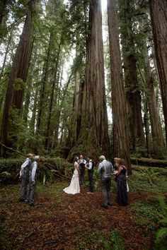 Cecilia And Craig S California Redwood Forest Wedding