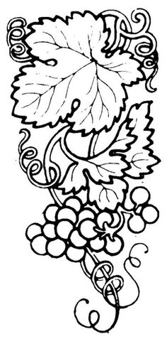 Grapes Coloring Pages 005