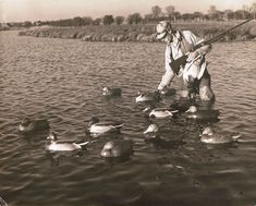 Enoch Reindahl master carver from Stoughton Wisconsin, setting out decoys. Waterfowl Hunting, Duck Hunting, Stoughton Wisconsin, Decoy Carving, Hunting Pictures, Duck Decoys, Duck Duck, Photographs, Photos