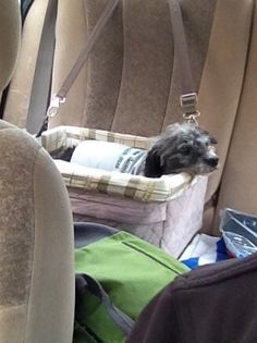 Pet Booster Seat, Most Favorite, Car Seats, Pup, Dogs, Animals, Products, Animales, Dog Baby