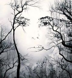 Face or branches?