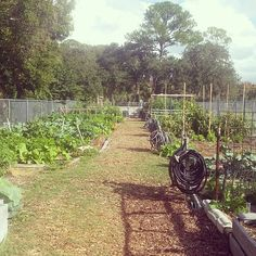 Sweet co-op garden. Laurel stop. From here on out the Deadlands for 20 Miles :) #legacytrail #waterbreak #gardening