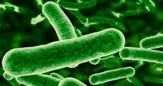Cianobacterias, mis antepasados más remotos... http://www.youtube.com/watch?v=SWRHxh6XepM&list=PL8FBFCA7E06603FD9