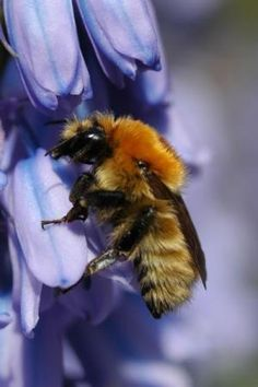 Answer Found To The Billions Of Dead And Disearing Bees Neonicotinoid Insecticides Act On Bee S