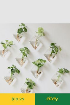 Mkono 2 Pack Wall Hanging Plant Terrarium Glass Planter, Diamond Fill with small plants, or other decorative objects and use as an eye-catching decorative accent for any space. Ideal for home, offi… Hanging Glass Planters, Hanging Air Plants, Hanging Terrarium, Hanging Gardens, Hanging Plant Wall, Diy Hanging, Hanging Baskets, Indoor Plant Wall, Indoor Plants