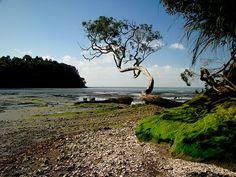 Titirangi, New Zealand