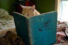Oh spannend boek